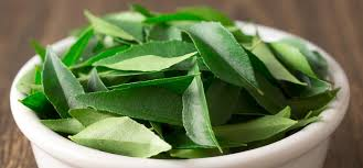 Curry leaves for weight loss