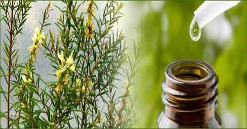 How to get rid of dandruff with tea tree oil