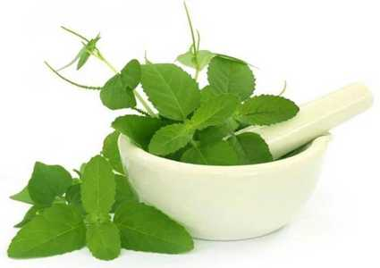 How to get rid of dandruff with tulsi leaves