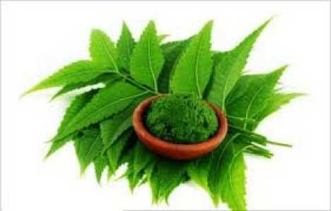 How to remove dandruff with neem leaves