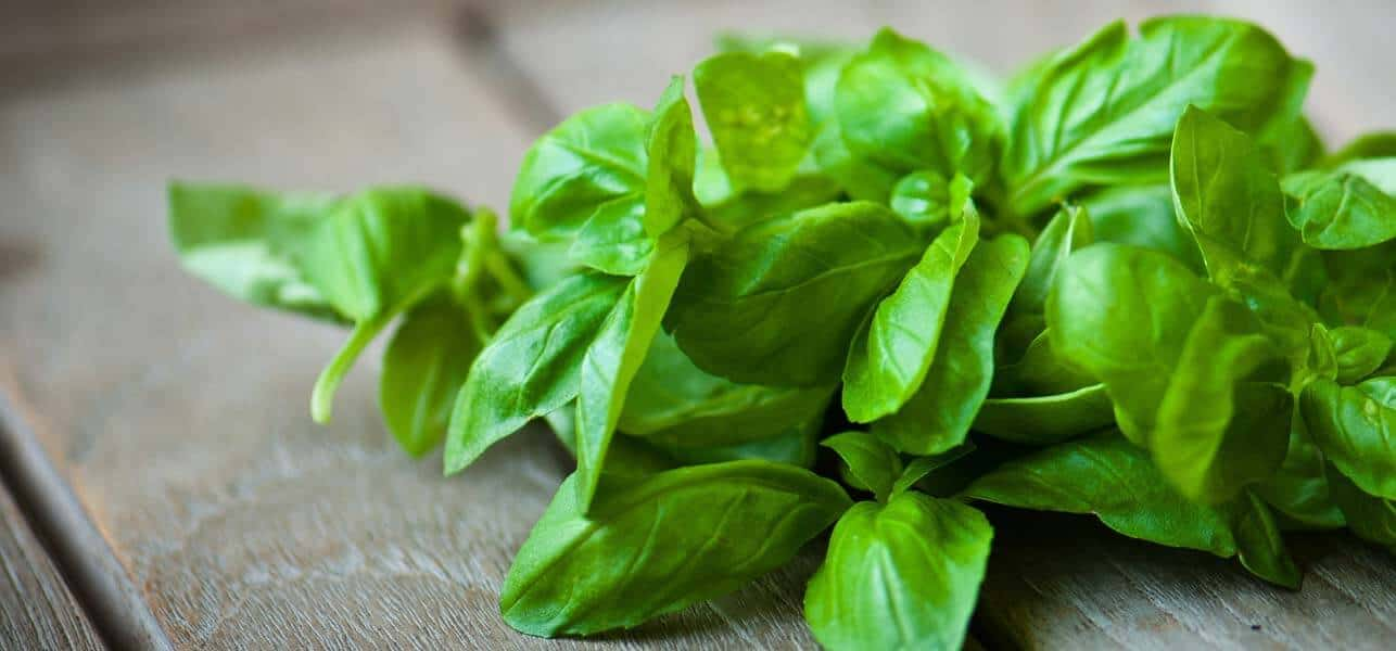 basil-leaves-as-natural-laxatives