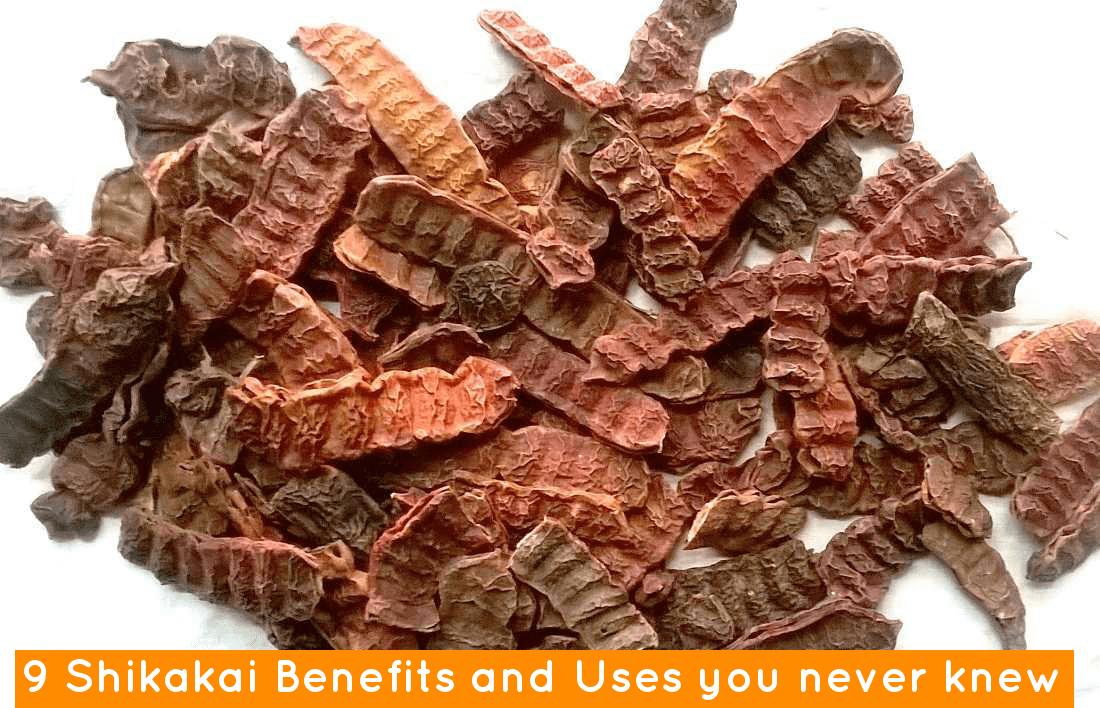 9 Shikakai Benefits And Uses You Never Knew