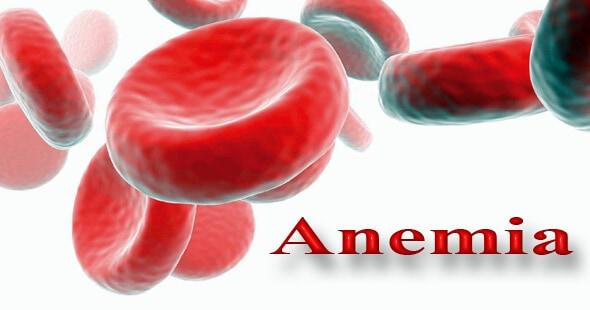 longan-for-anemia