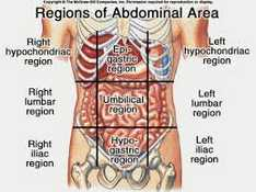 liver location in 9 quadrants