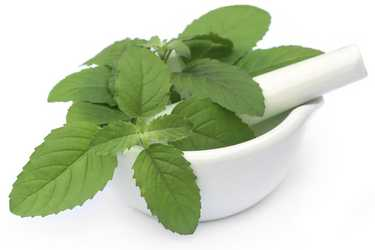 basil leaves to get rid of pimples